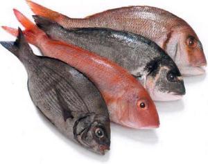 fresh fish1?w300&amph237 - Taza Machali Khane Ka Suwad